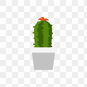 A Pot Of Cactus - Cactaceae Plant PNG
