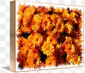 Fall Flowers - Cut Flowers Chrysanthemum Pot Marigold Daisy Family PNG