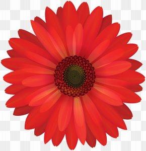 Gerbera Red Flower Clip Art - Transvaal Daisy Common Daisy Clip Art PNG