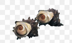 Beach Conch - Seafood Mussel Crab Conch PNG