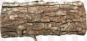 Tree - Trunk Tree Stump Snag Wood PNG