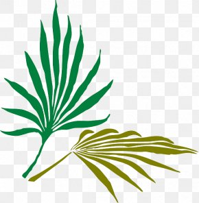 Leaf - Arecaceae Frond Palm Branch Clip Art PNG
