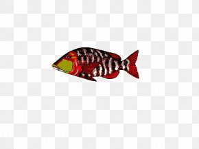 Colorful Fish - Delphi Database C++Builder Library Computer File PNG