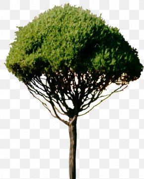 Stump - Tree Branch Woody Plant PNG