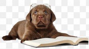 Reading Puppy - Labrador Retriever Siberian Husky Jack Russell Terrier Pug Golden Retriever PNG