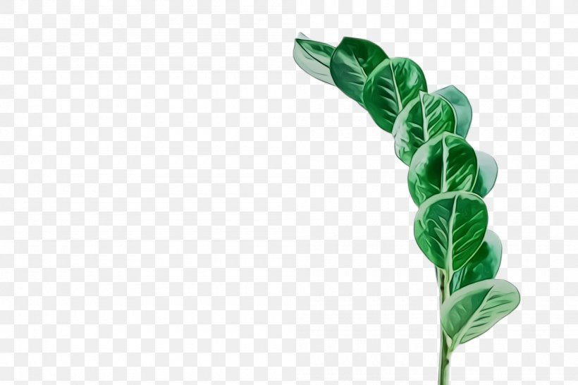Leaf Green Plant Flower Plant Stem, PNG, 2000x1332px, Watercolor, Flower, Green, Leaf, Leaf Vegetable Download Free