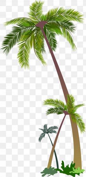 Vector Palm - Euclidean Vector Stock Photography Illustration PNG