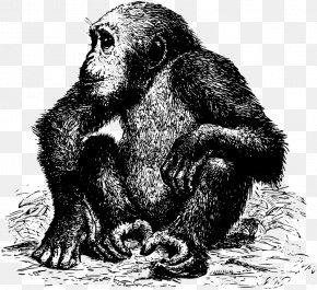 Orangutan - Common Chimpanzee Western Gorilla Ape Orangutan PNG