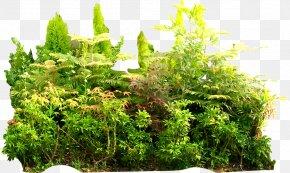 Tropical Jungle Green Summer - Tropical Rainforest Tropics Jungle Vegetation PNG