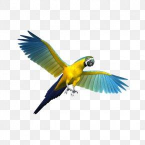 Flying Parrot - Parrot Bird Cockatiel Budgerigar Toy PNG