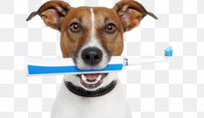 Dog - Dog Teeth Cleaning Veterinarian Veterinary Dentistry Pet PNG