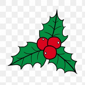 Cartoon Christmas Holly - Clip Art Drawing Image Common Holly Christmas Day PNG