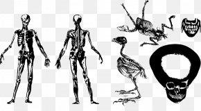 Vector Hand-painted Skeleton - Human Skeleton Skull Anatomy PNG