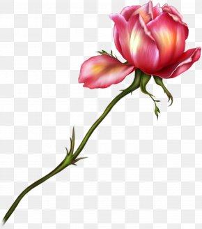 Rose Clipart - Garden Roses Drawing Flower Clip Art PNG