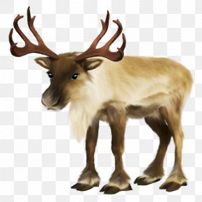 Santa Claus - Santa Claus's Reindeer Santa Claus's Reindeer Rudolph Sled PNG