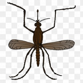 Insect - Insect Mosquito Natural Environment Environmental Education Fly PNG