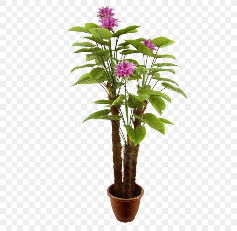 Norfolk Island Pine Houseplant