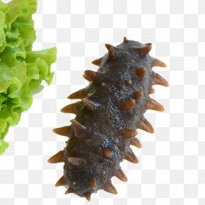 Sea Cucumber - Sea Cucumber As Food Seafood PNG
