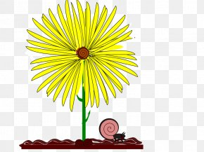 Flower Illustration - Flower Drawing Yellow Clip Art PNG