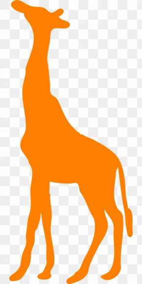 Giraffe No - Okapi Decal Sticker West African Giraffe Clip Art PNG