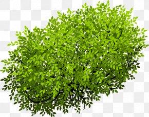 Bush Cartoon Vector Design - Tree Euclidean Vector PNG