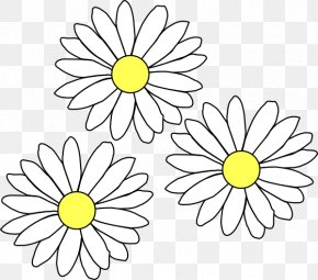 Daisies - Common Daisy Clip Art PNG