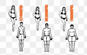 Woman Body Shape - Human Body Somatotype And Constitutional Psychology Eating Female Body Shape Muscle PNG