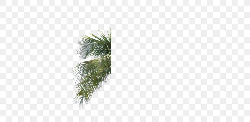 Arecaceae Palm Branch Leaf Tree Areca Palm, PNG, 358x400px, Arecaceae, Areca Palm, Arecales, Borassus Flabellifer, Coconut Download Free