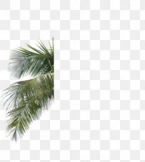Leaf - Arecaceae Palm Branch Leaf Tree Areca Palm PNG