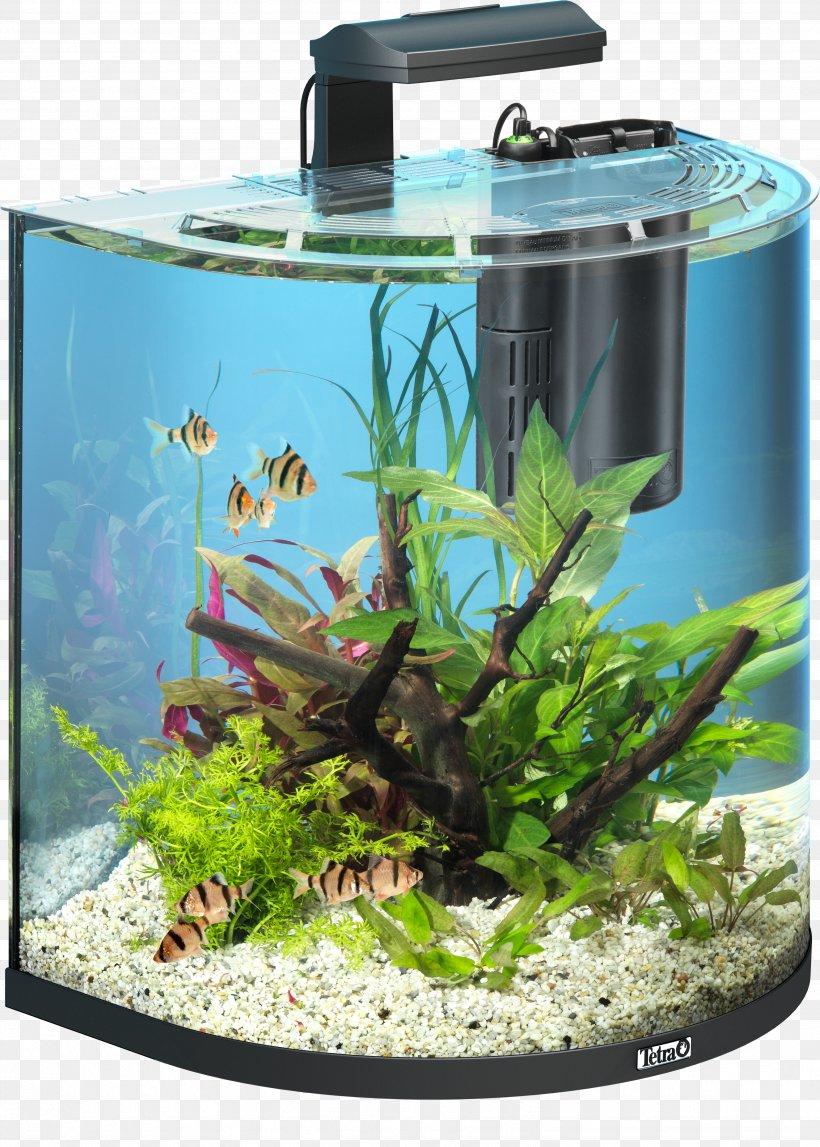 Goldfish Tetra Aquarium Pet Shop Png 3474x4861px Goldfish Aquarium Aquarium Decor Aquarium Filters Aquatic Plant Download