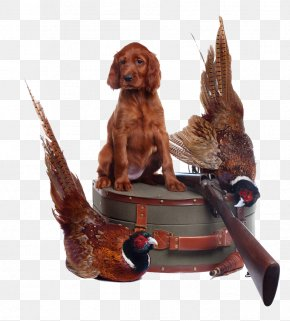 Pheasant On A Leather Suitcase - Irish Setter Gordon Setter Irish Red And White Setter Puppy PNG
