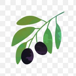 Vector Graphics Stock Illustration Drawing Olive PNG