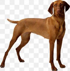 Dog Bone - Dog Food Puppy Cat Pet PNG