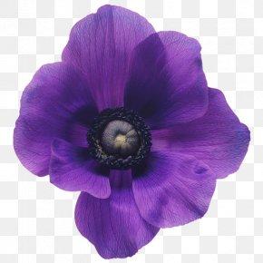 Flower - Flower Bouquet Purple Violet Cut Flowers PNG