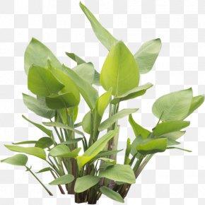 Plant - Leaf Herbalism Plant Stem PNG