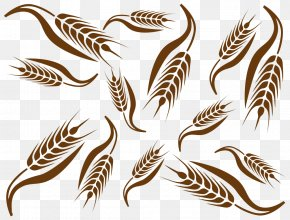 Variety Of Wheat - Common Wheat Ear Cereal Clip Art PNG
