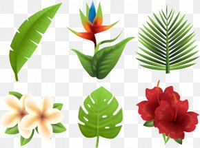 Tropical Plants - Tropics Euclidean Vector Flower PNG