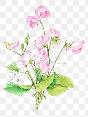 Watercolor Flowers - Pea Watercolor: Flowers Watercolor Painting Floral Design PNG