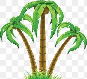 Summer Tree Cliparts - Arecaceae Coconut Wall Decal Tree Clip Art PNG