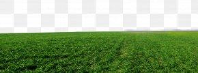 Green Grass Background - Crop Lawn Grassland Artificial Turf Land Lot PNG