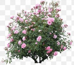 Tree - Shrub Tree PNG