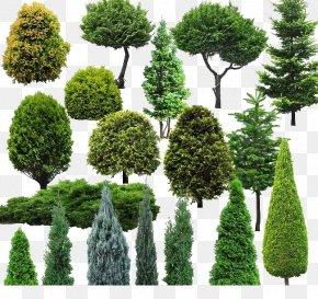 Environmental Image - Tree Natural Environment PNG