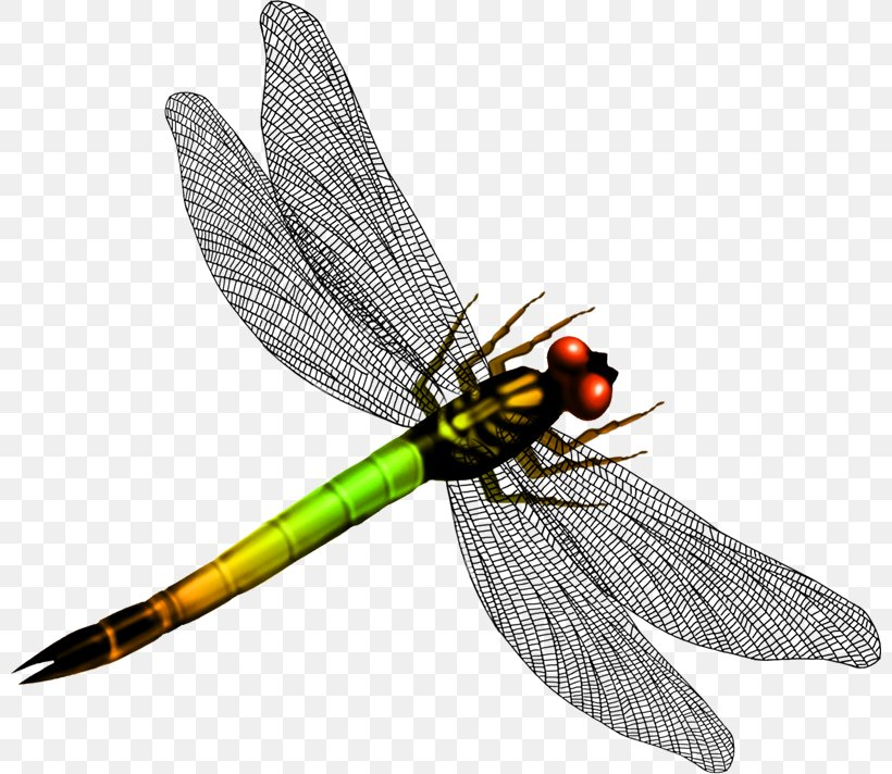 Graphic Design Png 800x712px Art Arthropod Dragonflies