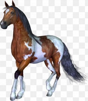 Horse - Horse 3D Computer Graphics Animal PNG