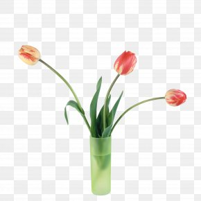 Red Tulips - Tulip Flower Digital Image PNG