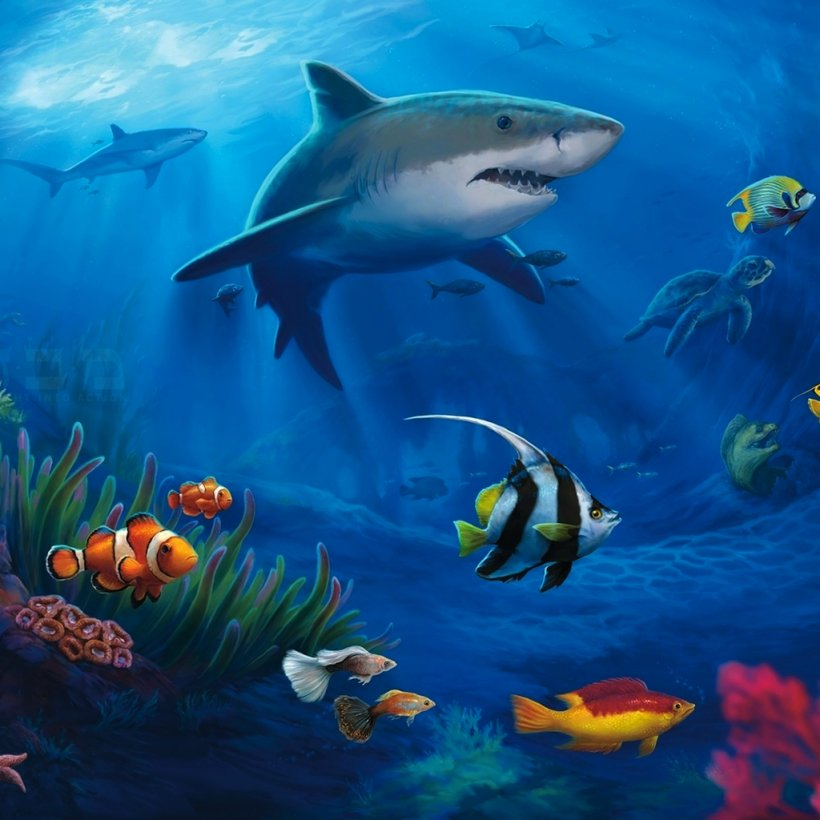 Fish Underwater Desktop Wallpaper Sea Ocean Png 1024x1024px