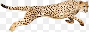 Running Cheetah - Cheetah Clip Art PNG