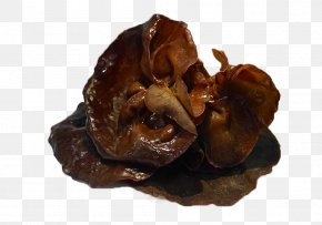 Fungi - Jelly Fungus Oyster Mushroom Exidia Glandulosa Snow Fungus PNG