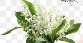 Lily Of The Valley - Lily Of The Valley 1 May Flower Labour Day PNG