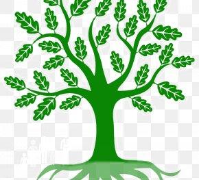 Leaf - Branch Green Leaf Root Clip Art PNG